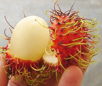 Peeled, ripe rambutan from Thailand.